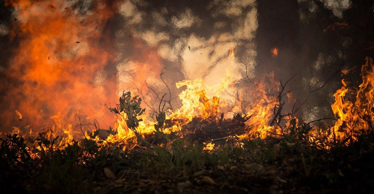 Entre as principais diferenças entre as queimadas na Austrália e no Brasil, podemos destacar o ecossistema dos países, que influencia nos impactos causados pelos incêndios.